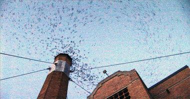 portland swifts